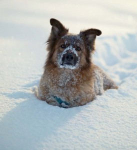Keep Your Pet Safe this Winter