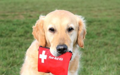 Are You Pet Ready for an Emergency or Disaster?